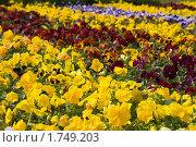 Купить «Цветочная клумба», фото № 1749203, снято 2 июня 2010 г. (c) Бондаренко Олеся / Фотобанк Лори