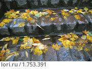 Купить «Опавшие листья на ступеньках», эксклюзивное фото № 1753391, снято 16 октября 2008 г. (c) Svet / Фотобанк Лори