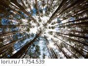 Купить «Деревья в лесу», фото № 1754539, снято 4 июня 2010 г. (c) Толоконов Дмитрий Львович / Фотобанк Лори