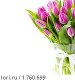 Купить «Тюльпаны  в вазе», фото № 1760699, снято 30 апреля 2010 г. (c) Наталия Кленова / Фотобанк Лори
