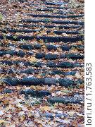Купить «Ступени», эксклюзивное фото № 1763583, снято 29 октября 2006 г. (c) Svet / Фотобанк Лори