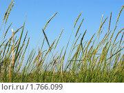 Купить «Зеленая трава на фоне голубого неба», фото № 1766099, снято 26 февраля 2020 г. (c) Денис Веселов / Фотобанк Лори