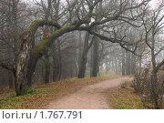 Парковая дорожка. Стоковое фото, фотограф Виталий Фурсов / Фотобанк Лори