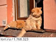 Июньские коты. Стоковое фото, фотограф Турищева Оксана / Фотобанк Лори