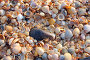 Фон из ракушечника - фрагмент пляжа на Азовском море, фото № 1772523, снято 15 августа 2009 г. (c) Анна Мартынова / Фотобанк Лори