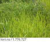 Трава. Стоковое фото, фотограф Ольга Косилова / Фотобанк Лори