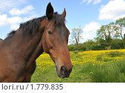 Портрет лошади. Стоковое фото, фотограф Татьяна Кахилл / Фотобанк Лори