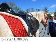 Купить «Девушка и пегая лошадь в парке отдыха. Город Тюмень», фото № 1780099, снято 8 мая 2010 г. (c) Анатолий Матвейчук / Фотобанк Лори