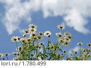 Купить «Ромашки на фоне облачного неба», фото № 1780499, снято 11 мая 2010 г. (c) Евгений Дробжев / Фотобанк Лори