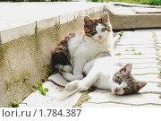 Два котёнка играют. Стоковое фото, фотограф Арти Homa / Фотобанк Лори