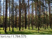Купить «Молодой сосновый лес», эксклюзивное фото № 1784575, снято 4 мая 2009 г. (c) Алёшина Оксана / Фотобанк Лори