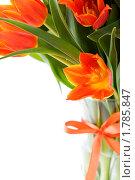 Купить «Букет оранжевых тюльпанов», фото № 1785847, снято 30 апреля 2010 г. (c) Наталия Кленова / Фотобанк Лори