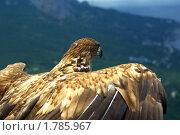 Купить «Орел», фото № 1785967, снято 18 июня 2010 г. (c) Саломатников Владимир / Фотобанк Лори