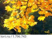 Золотая осень. Стоковое фото, фотограф Юрий Брыкайло / Фотобанк Лори