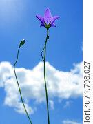 Купить «Лиловый колокольчик на фоне голубого неба, съемка против солнца», фото № 1798027, снято 26 июня 2010 г. (c) Ольга Остроухова / Фотобанк Лори