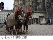 Вена. Лошади перед собором святого Стефана (2010 год). Редакционное фото, фотограф Яна Векуа / Фотобанк Лори