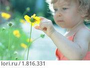 Купить «Ребенок трогает одним пальцем желтый цветок», фото № 1816331, снято 3 июня 2010 г. (c) yarruta / Фотобанк Лори