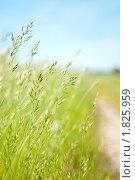 Тропинка в поле. Стоковое фото, фотограф Андрей Цалко / Фотобанк Лори