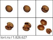 Грецкие орехи на белом фоне. Стоковое фото, фотограф Insomnia / Фотобанк Лори