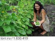 Молодая женщина на уборке огурцов. Стоковое фото, фотограф Сергей Слабенко / Фотобанк Лори