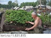 Купить «Ягода на затопленном садовом участке», фото № 1831815, снято 26 июня 2010 г. (c) Free Wind / Фотобанк Лори