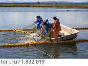 Купить «Промысел горбуши на Сахалине», фото № 1832019, снято 17 сентября 2009 г. (c) Пьянков Александр / Фотобанк Лори