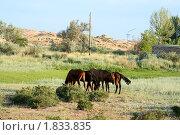 Купить «Четыре жеребенка пасутся на лугу», фото № 1833835, снято 27 июня 2010 г. (c) Вера Тропынина / Фотобанк Лори
