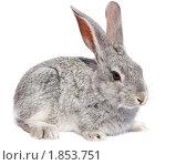Купить «Кролик домашний», фото № 1853751, снято 6 мая 2010 г. (c) Василий Вишневский / Фотобанк Лори