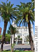 Купить «Абхазия, Сухум. Пальмы на фоне здания мэрии», фото № 1853851, снято 19 июня 2010 г. (c) Константин Бредников / Фотобанк Лори