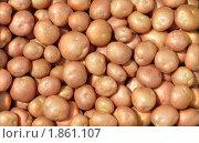 Купить «Картофель», фото № 1861107, снято 23 июля 2010 г. (c) Бондарь Александр Николаевич / Фотобанк Лори