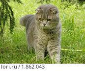 Кот в лесу. Стоковое фото, фотограф Евгений Тучков / Фотобанк Лори