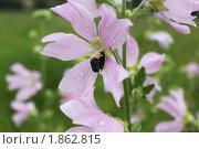Сиреневый цветок. Стоковое фото, фотограф Анастасия Захаренко / Фотобанк Лори