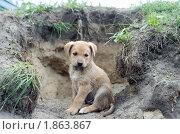 Купить «Щенок», фото № 1863867, снято 26 мая 2010 г. (c) Иван Нестеров / Фотобанк Лори