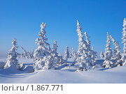 Зимний пейзаж. Стоковое фото, фотограф Rumo / Фотобанк Лори