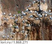 Купить «Чайка (Larus)», фото № 1868271, снято 30 июня 2009 г. (c) Некрасов Андрей / Фотобанк Лори