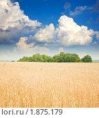 Купить «Пшеничное поле», фото № 1875179, снято 28 июля 2010 г. (c) Яков Филимонов / Фотобанк Лори