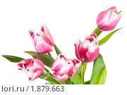 Купить «Букет тюльпанов, изолированно на белом фоне», фото № 1879663, снято 17 февраля 2010 г. (c) Юрий Брыкайло / Фотобанк Лори