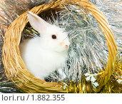 Купить «Белый кролик в корзине», фото № 1882355, снято 31 июля 2010 г. (c) Яков Филимонов / Фотобанк Лори