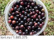 Купить «Ведерко ягод черной смородины», фото № 1885375, снято 1 августа 2010 г. (c) Катерина Макарова / Фотобанк Лори
