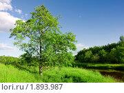 Летний пейзаж с рекой. Стоковое фото, фотограф Анфимов Леонид / Фотобанк Лори