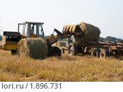 Сельскохозяйственные работы. Заготовка сена на зиму. Стоковое фото, фотограф Олег Тыщенко / Фотобанк Лори