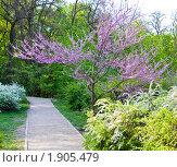 Купить «Цветущее розовое дерево», фото № 1905479, снято 4 мая 2010 г. (c) ИВА Афонская / Фотобанк Лори