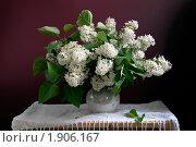 Купить «Букет белой сирени в вазе», фото № 1906167, снято 19 мая 2010 г. (c) Julia Ovchinnikova / Фотобанк Лори