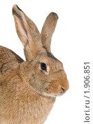 Купить «Кролик», фото № 1906851, снято 7 августа 2010 г. (c) Дмитрий Калиновский / Фотобанк Лори