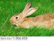 Купить «Кролик», фото № 1906859, снято 7 августа 2010 г. (c) Дмитрий Калиновский / Фотобанк Лори