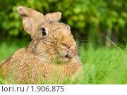 Купить «Кролик», фото № 1906875, снято 7 августа 2010 г. (c) Дмитрий Калиновский / Фотобанк Лори