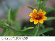 Желтый цветок. Стоковое фото, фотограф Мария Васильева / Фотобанк Лори