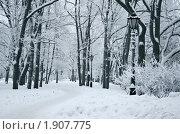 Адмиралтейский парк зимой. Стоковое фото, фотограф Мария Васильева / Фотобанк Лори