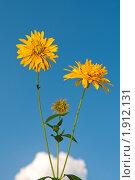 Купить «Золотые шары на фоне неба», эксклюзивное фото № 1912131, снято 19 июля 2010 г. (c) Юрий Морозов / Фотобанк Лори