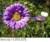 Фиолетовое солнце. Стоковое фото, фотограф Юлия Киреева / Фотобанк Лори